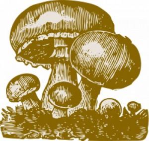 Conservation des champignons